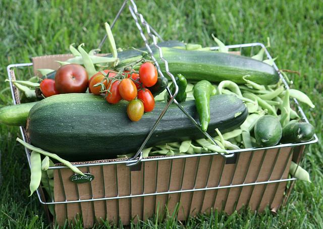 fresh picked garden veggies